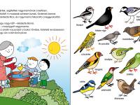 énekes madarak a kertben