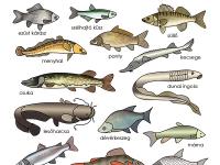 a Duna halai