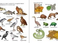 A Hunyadi-sziget állat- és növényvilága